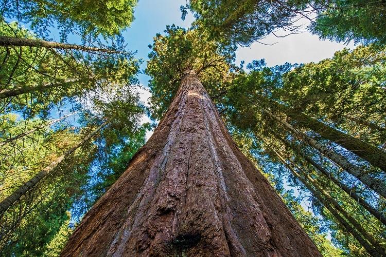 Sürdürülebilir Ormancılık ve FSC®