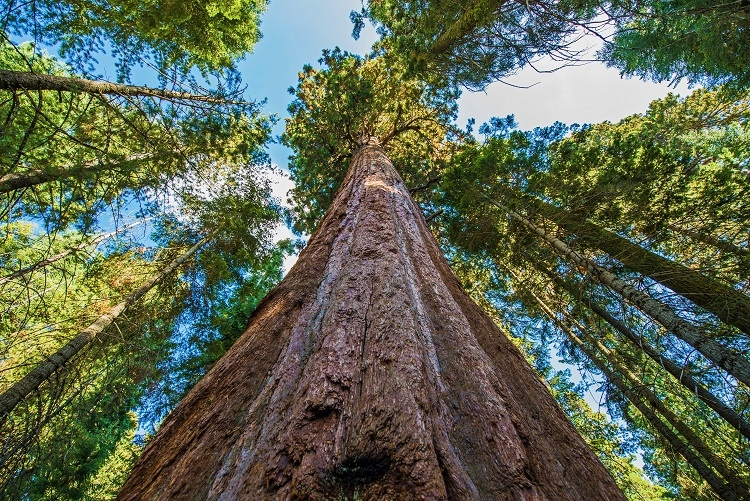 Sustainable Forestry and FSC®